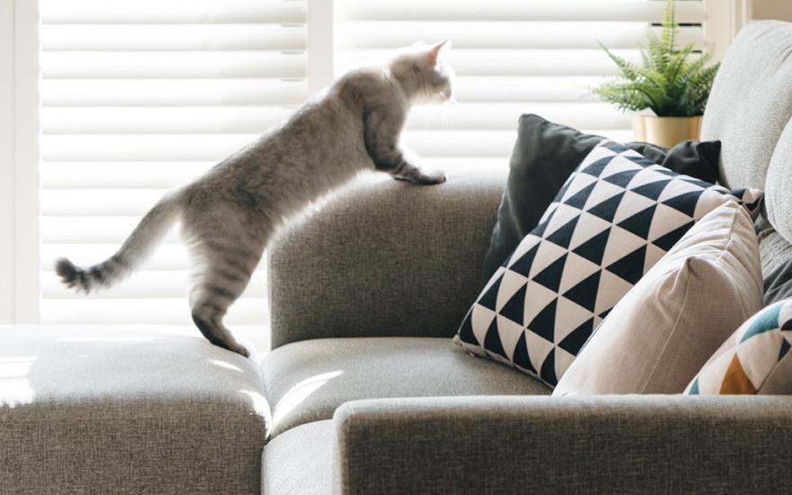 Обивка мебели против кошек